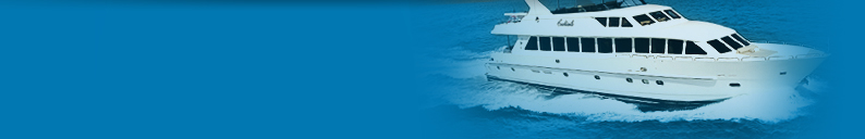 Sea Hawk Paints Clearwater Florida